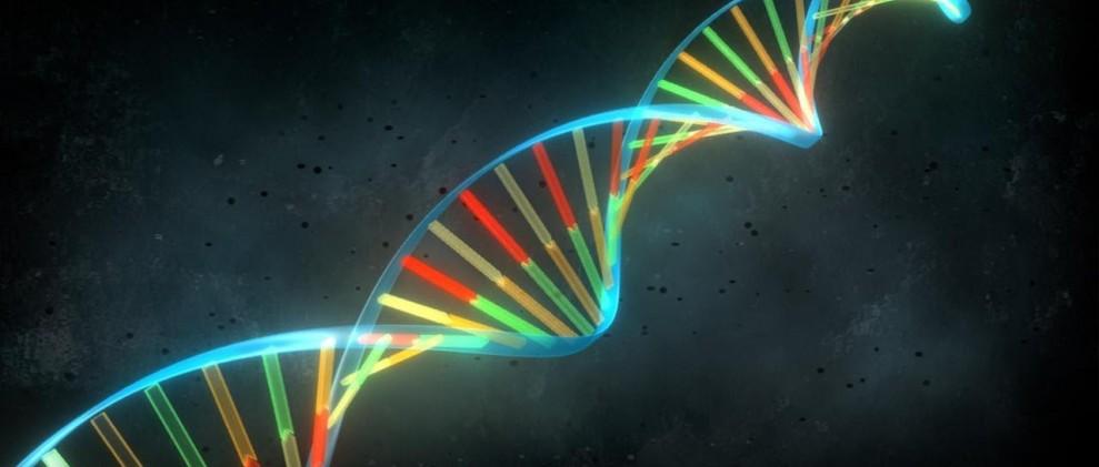Obradoiro de ADN