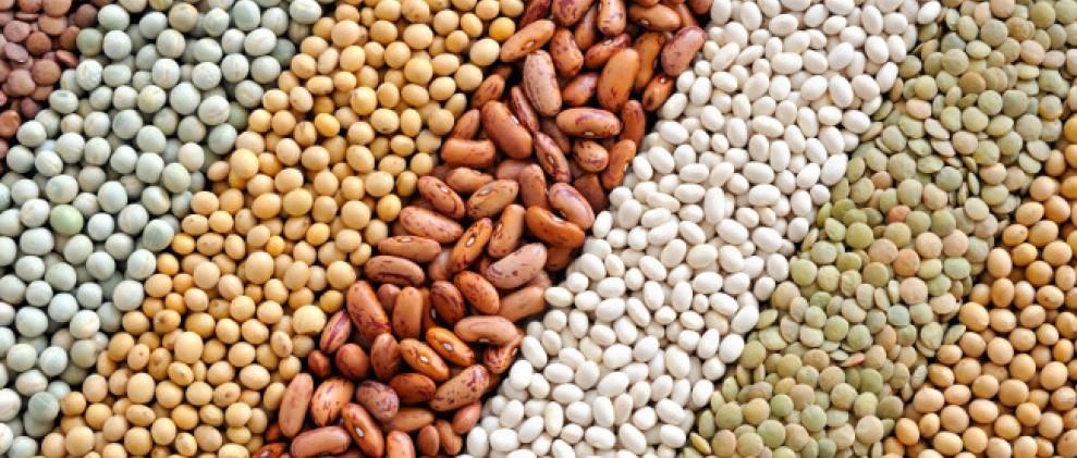 Ano Internacional dos legumes